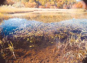 湖沼の生態系管理と生物多様性保全は今|環境儀 No.09|国立環境研究所